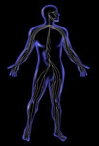 système nerveux autonome